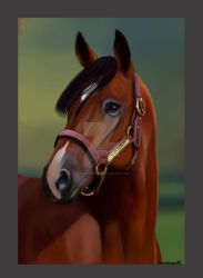 Champ by horsehaven95