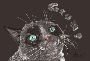 Tard the Grumpy Cat by Jodee