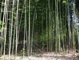 Bamboo 7 by AlissaDStock