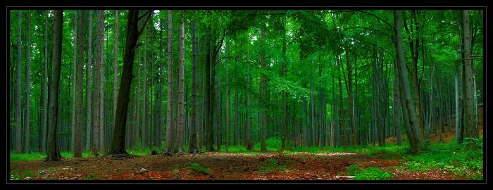 Misty Forest... III by ArcziPL
