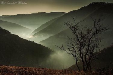 Bring to light by Annabelle-Chabert