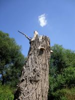 A wooden chimney by nosf-3-ratu