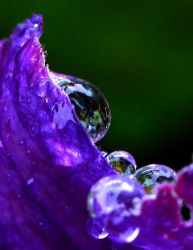 purple rain... by shotsfiredimagedown