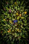 Forrest from above by Aliz1
