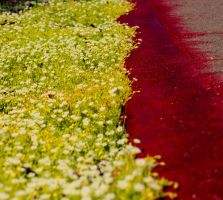 Blood and Moss in Bloom by KeswickPinhead