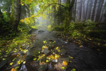 Misty Waters by MarcoHeisler