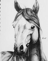 Horse Sketch by SilverStone-Artworks