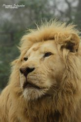 Bouba is our king by MorganeS-Photographe