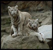 sisters by morho
