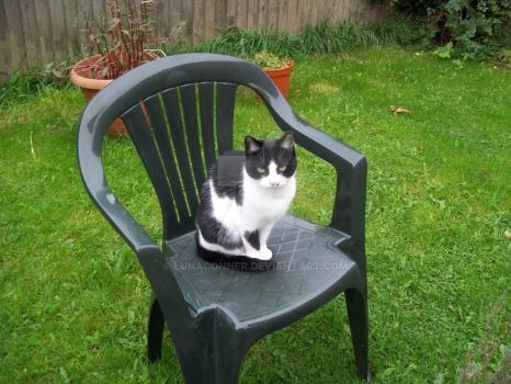Blossom on the garden chair by LunaConner