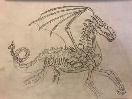 Dragon Anatomy by DuskWing5