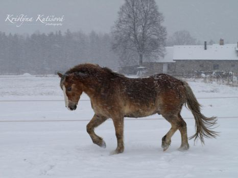 The day when snow was falling by kutiska
