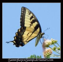 Butterfly 3 by Sammykaye1sStamps