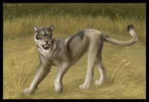 Reversed Wolf-Cat by Tacimur