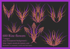 680 Rize Flowers by Tigers-stock