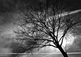 Trees Come Down by Rubengda