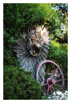 2017-262 Old Lion by pearwood