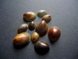 Shells from outer Space by CabinetCuriosities