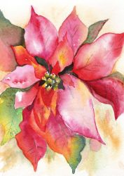 Christmas Poinsettia 2009 by aladyx