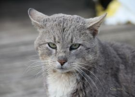 Another Stray by cindy1701d