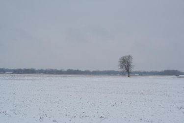 Distant tree stock by JustinByerline-Stock