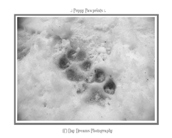 .:Puppy Pawprints:. by DayDreamsPhotography