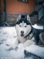 Bak and first snow in 2012. by mare037