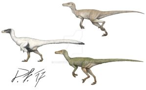 Velociraptor now and then by Pachyornis