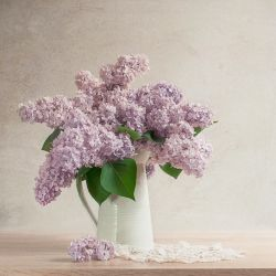 Lilac I by Justysiak