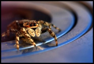 Retracted Jumper by FramedByNature