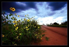 Sunflowers In Disarray by Sun-Seeker