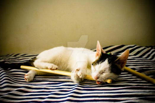 Cat vs stick 1 by andyguitar