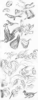 J'jaer sketch studies by AlysaTaladay