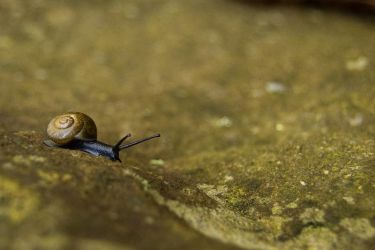 Tiny Snail by ringtaillemur
