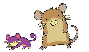 Ratatta and Raticate
