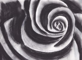 Black and white charcoal rose by Bex013