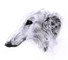 Borzoi by frostedacorn