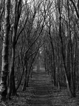 Into the Woods by BloodyMel666