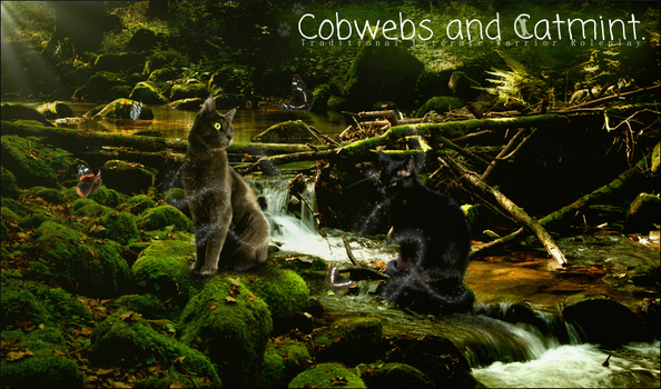 Cobwebs And Catmint Banner Contest by MegTheOreo