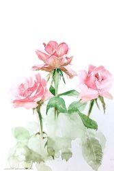 Roses by jakhont