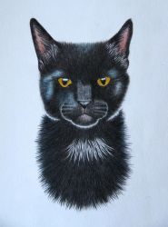 Simba the black cat by MoonTrizer