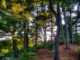 Arnold Arboretum by the3dman