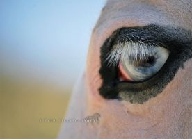 In my eyes... you IV by firegold