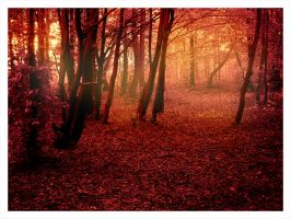 Autumn by Apha-Photo
