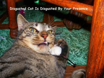 .:Disgusted Cat is Disgusted By Your Presence:. by Shadouge4eva