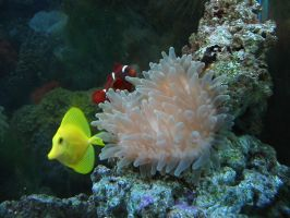 Anemone with Tang w Clownfish by Sunspot01