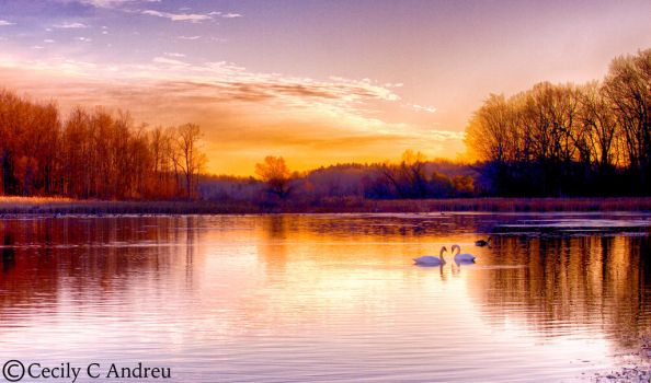Swan Lake by CecilyAndreuArtwork