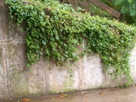 Ivy Wall by Earthy-Stock
