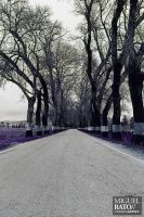 Road to Freedom by Aerorato
