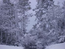 snow in MB SC 2-13-2010 8 by unickme